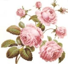 BesT ShaBby PinK CaBbaGe RoSeS WaTerSLiDe DeCALs *VinTaGe ChaRm*