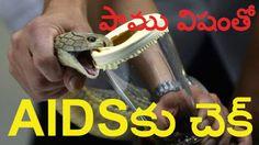 Vantinti Chitkalu: పాము విషంతో ఎయిడ్స్ కు చెక్ | Snake Venom Can Cure...