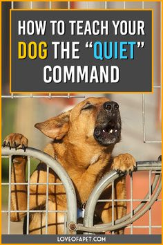 """How to Teach Your Dog the """"Quiet"""" Command: You first need to get him acquainted with the """"speak"""" command first and then gradually introduce """"quiet"""" command. Dog Training Treats, Dog Training Videos, Training Your Puppy, Training Tips, Dog Treats, Potty Training, Puppy Training Schedule, Brain Training, Dog Commands"""