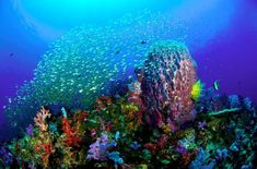 Image detail for -As the seas become more acidic through global warming and increased carbon dioxide levels, there's a real possibility that coral reefs and the sea life that relies ...