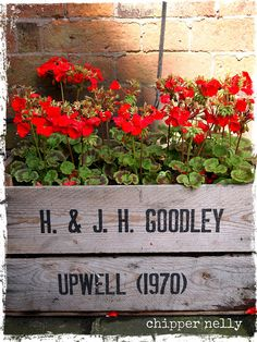 red geraniums in vintage wooden crate planter