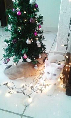 Preparando pro Natal. SQN... =)