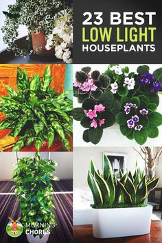 Growing indoor plant is the best way to transform any house into a home. Here's the list of 23 low-light houseplants that are easy to keep alive.