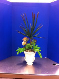 Medium succulent plant SBA 2014 Lisa Peterson