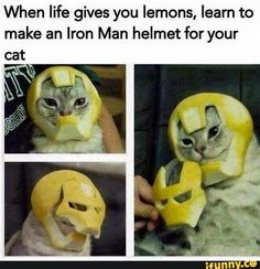 26 Funny Photos That Are Sure to Make You Laugh. - Informationen zu 26 Funny Photos That Are Sure to Make You Laugh. Funny Animal Jokes, Funny Animal Pictures, Cute Funny Animals, Funny Cute, Really Funny, Cute Cats, Animal Humor, Funny Memes For Kids, Super Funny Memes