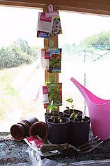 labeled seed clips (potting shed/greenhouse)