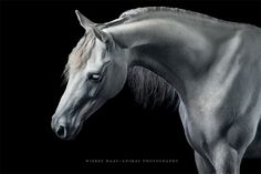 "Marble - ""Royal out Of The Blue"" 