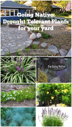 Going Native: Drought Tolerant plants for your yard :: OrganizingMadeFun.com