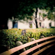 Bird takes off: a mix of four shots of a bird taking off in Dupont Circle, 2009 - by Geoffrey Dudgeon, Canadian