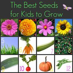 Just in time for spring! The best seeds for kids to grow after reading Stanley the Farmer. Spring Activities, Craft Activities For Kids, Science Activities, Garden Club, Kid Garden, Diy Garden Projects, Garden Ideas, Farm Lessons, Planting For Kids