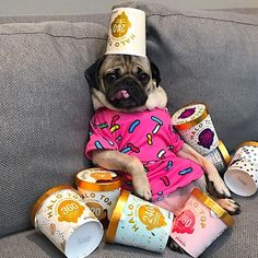 17 Pictures Confirming That Pugs Love Pink Color Funny Dog Memes, Funny Animal Memes, Funny Dogs, Cute Baby Pugs, Cute Dogs And Puppies, Black Pug Puppies, Bulldog Puppies, Doggies, Doug The Pug