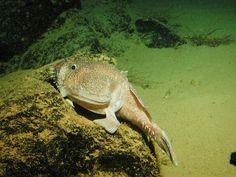 Strange Sea Creature