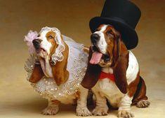 30 casais de cachorros que mostram como o amor é lindo | COSMOPOLITAN