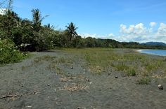 playa negra puerto viejo grass   - Costa Rica