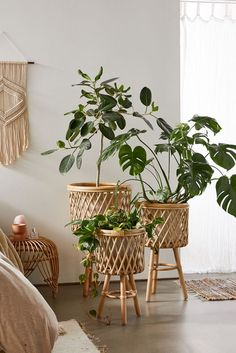 Vaso de madeira para sala de estar Room With Plants, House Plants Decor, Plant Rooms, Living Room Plants Decor, Bedroom Plants Decor, Large Plants, Rattan Planters, Indoor Planters, Planter Pots