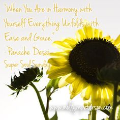 I loved this quote from Panache Desai from Oprah's Super Soul Sunday interview so I combined it with one of my sunflower shots. Harmony. :)