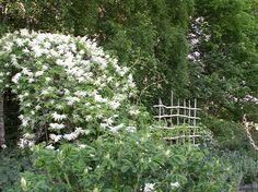 vit trädgård