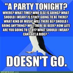 memes-a-party-tonight.jpg (500×500)