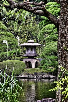 A view into a Japanese Garden...