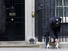 A police officer strokes Larry, the cat who patrols 10 Downing Street in London. Although David Cameron has resigned as prime minister, Larry will retain his position as prime mouser.