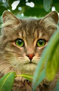 These cute kittens will make you happy. Cats are wonderful creatures. Cute Cats And Kittens, I Love Cats, Crazy Cats, Cool Cats, Kittens Cutest, Pretty Cats, Beautiful Cats, Animals Beautiful, Hello Beautiful