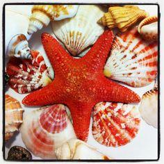 Sea shells View Photos, Sea Shells, Fish, Beach, The Beach, Seashells, Pisces, Beaches, Shells