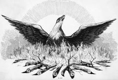 inch Canvas Print (other products available) - PHOENIX. Line engraving, century. - Image supplied by Granger Art on Demand - Box Canvas Print made in the USA Roman Love, Phoenix Bird, Phoenix Animal, Framed Prints, Canvas Prints, Fantastic Beasts, Fantasy Creatures, Egyptian, Poster Size Prints