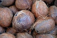 Using Coco Coir As A Soil Amendment In Your Organic Garden Superfood, Coconut Water, Coconut Oil, Fitness Drink, Willow And Sage, Coconut Benefits, Animal Agriculture, Garden Compost, Exotic Food
