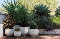 Apartment balcony garden terraces plants trendy Ideas - All About Balcony Apartment Balcony Garden, Terrace Garden, Garden Pots, Apartment Plants, Balcony Gardening, Small Terrace, Small Patio, Apartment Ideas, Outdoor Pots
