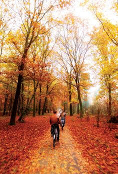 Get the most out of Fall-Walk, Run or Bike on one of Kansas City's beautiful trails.