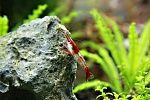 Little white worms in shrimp tank - Aquarium Advice - Aquarium Forum Community