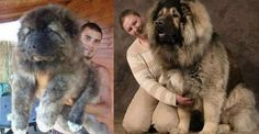 30 raças raras de cães que provavelmente você não conhece  Veja mais aqui http://climatologiageografica.com.br/30-racas-extremamente-raras-de-caes-que-provavelmente-voce-nao-conhece/#ixzz41JZlQy20
