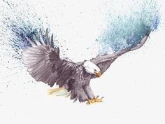 (disambiguation) An eagle is a large bird of prey. Eagle or The Eagle may also refer to: Watercolor Canvas, Watercolor Bird, Watercolor Paintings, Watercolor Drawing, Fly Drawing, Eagle Drawing, Eagle Images, Eagle Pictures, Animal Paintings