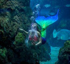 mermaids-3764
