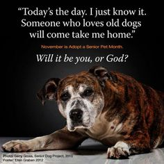 November - adopt a senior pet Month ! Today's the day. Someone who loves old dogs will come TAKE ME HOME. Will it be YOU or GOD? Adopting a senior dog is one of the most rewarding events ever. Older animals are more mellow, have snugg Dog Quotes, Animal Quotes, Animal Rescue Quotes, Mon Combat, Game Mode, Animals And Pets, Cute Animals, Old Dogs, Animal Rights