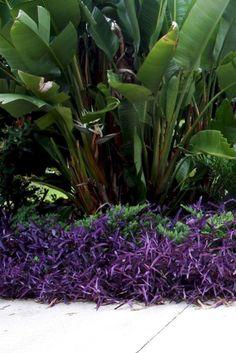 The rainforest garden: tropical color in the summer garden bali garden, balinese garden, Bali Garden, Balinese Garden, Diy Garden, Shade Garden, Garden Projects, Garden Plants, Vegetables Garden, Fence Garden, Garden Borders