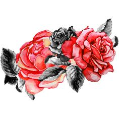 rose - Page 7 ❤ liked on Polyvore featuring backgrounds, roses, decor and flowers