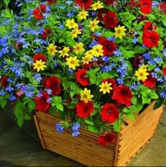 Fire and Ice includes Petunia Whispers Red, Bidens Mexican Gold, and Lobelia Techno Heat Electric Blue. Container Flowers, Flower Planters, Container Plants, Planter Pots, Flower Landscape, Landscape Edging, Landscape Plans, Outdoor Flowers, Container Gardening Vegetables