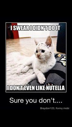 Afia's cat