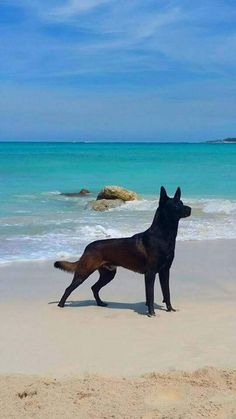"""two of my favourite things """"beautiful beach and a beautiful mal"""""""