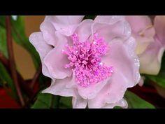 Jorge Rubicce - Bienvenidas TV - Modela en porcelana fría una caja con flor en 3D. - YouTube