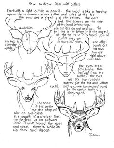 Drawing Animals How to Draw Worksheets for Young Artist: How To Draw a Buck Deer With Antlers, Worksheet Drawing Lessons, Drawing Techniques, Art Lessons, Drawing Tips, Art Handouts, Art Worksheets, Drawing Sketches, Sketching, Learn To Draw