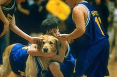 The dog who played Airbud also played Comet on Full House. | 17 Things You Never Knew About The Animals In Your Favorite Movies