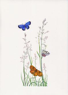 Blue Butterfly and Wood Nymph Butterfly
