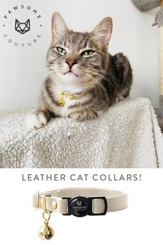 A stunning Cat Collar made from beautiful soft leather with a quick release safety buckle, our breakaway leather cat collars are super comfortable against your cats skin. Leather Cat Collars, Cat Skin, Soft Leather, Safety, Fancy, Cats, Animals, Beautiful, Collection