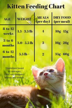 Kitten feeding chart for kittens on a dry food schedule. Quantities of kitten food or kibble to feed at different ages