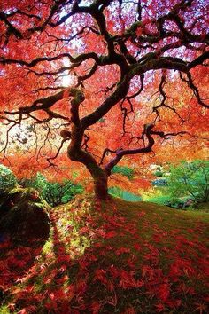 Gardening Autumn - Autumn in Japanese Maple tree - Portland Japanese Garden, Oregon - With the arrival of rains and falling temperatures autumn is a perfect opportunity to make new plantations What A Wonderful World, Beautiful World, Beautiful Gardens, Beautiful Places, Amazing Places, Portland Japanese Garden, Japanese Gardens, Japanese Landscape, Japanese Nature