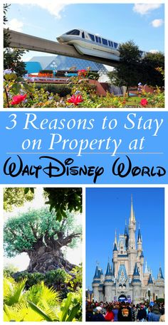 Stay at a Disney World resort is not a cheap decision! We've got three great reasons why we think it's worth it. Check out our list for the best reasons to stay on property at Disney World. Disney Destinations, Walt Disney World Vacations, Disneyland Trip, Disney On A Budget, Disney Vacation Planning, Disney Ideas, Vacation Ideas, Trip Planning, Disney Resort Hotels