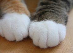 Kitty paws