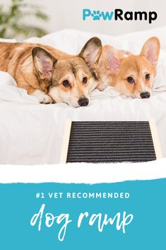 The PawRamp is the must have dog ramp to help small to medium sized dog reach the bed or couch with ease. Protect your dogs from painful back problems commonly caused by jumping up and down high to reach areas. Large Animals, Baby Animals, Cute Animals, Dog Ramp, Corgi Mix, Training Your Dog, Training Collar, Pet Feeder, Dog Chews